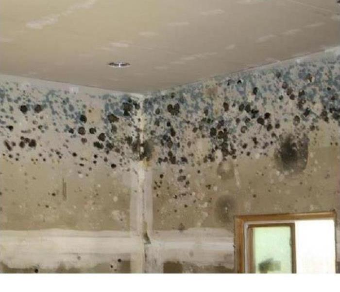 Mold on walls and ceiling